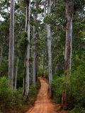 Karri Forest, Warren National Park
