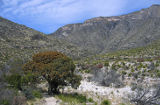 McKittrick Canyon, Guadalupe Mountains